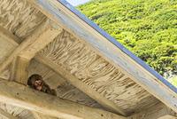 南伊豆波勝崎の猿、軒裏で横たわり面白い表情を浮かべる子供の猿