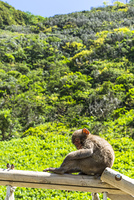 南伊豆波勝崎の猿、ブランコの上で困ったような悲しいような表情を浮かべる猿