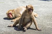 南伊豆波勝崎の猿、別れ話のシーンを演じているような二匹の猿