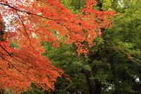 明治神宮外苑の紅葉