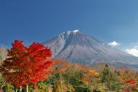 秋の紅葉と富士山