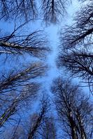 樹木と青空