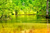 新緑を映す池