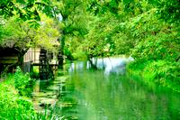 緑の中の水車