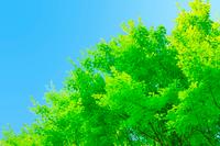 青空に新緑