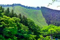 山にも新緑