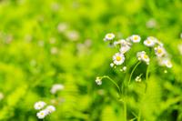 新緑と草花
