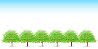 木 葉 新緑 背景