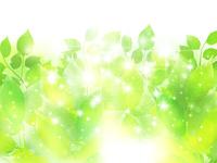新緑 木 葉 背景
