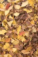 落ち葉の積もった地面