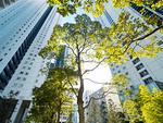 高層マンション街と植栽