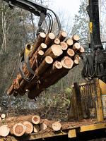 材木の切り出し