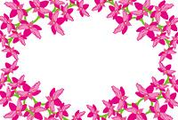 ピンクの蘭の花の円形の枠縁