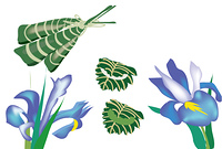子供の日のお祝いのちまきとかしわもちと菖蒲の花