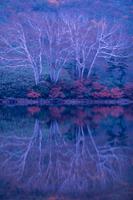 樹木と水影(対称)