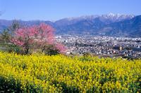 菜の花畑からの風景