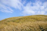 白い雲と草原・久住高原