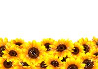 向日葵の綺麗な背景