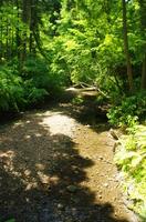 山の中の小川