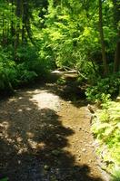 新緑の河原