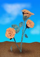 Roses in soil