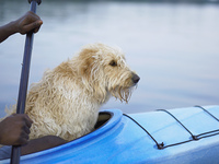 Side view of dog sitting in kayak with hands of man