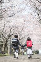 桜並木を歩く小学生男女の後姿