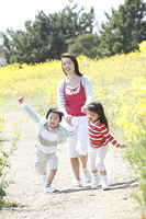 菜の花畑を歩く母子