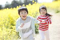 菜の花畑を走る小学生男女