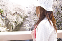 桜を眺める女性の後姿