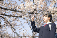 桜を撮影する女子中学生