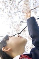 桜に触れようとする女子中学生