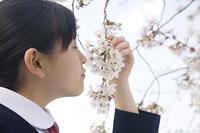 桜の香りを嗅ぐ女子中学生