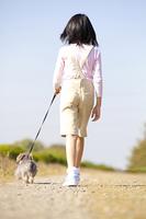 ミニチュアダックスワイヤーヘッドと散歩する女の子の後姿