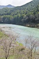 早春の吉野川