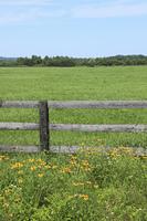 牧場の木柵