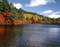 秋の白駒池