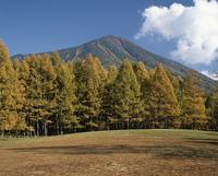 カラマツ黄葉と男体山