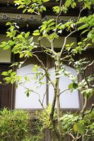 日本家屋の障子と木