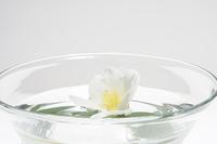 水鉢に入れた白色の椿の花