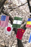 桜と万国旗