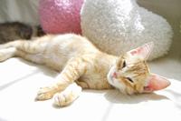 ソファーで昼寝する子猫