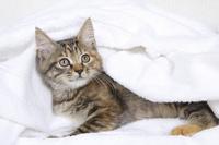 白いタオルに包まった子猫