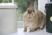 ホビー缶の間にいるウサギ