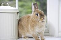 ホビー缶の横でおすましウサギ