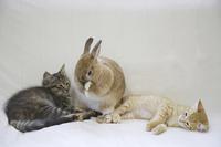 仲良くソファーで寛ぐ二匹の子猫とウサギ