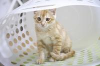 ランドリー籠の中でお座り子猫