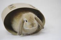 箱の中から顔を出すウサギ
