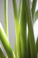 観葉植物グリーン