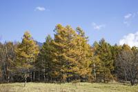 カラマツの黄葉と戦場ヶ原
